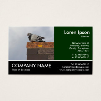 Foto pagada - pombo do bom dia cartão de visitas