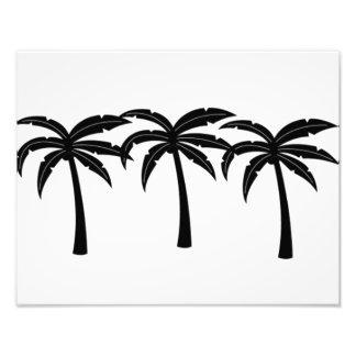 Foto Palmeiras tropicais
