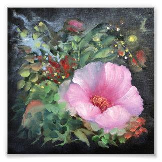 Foto Papoila cor-de-rosa no fundo preto, flor da