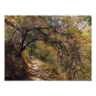 Foto Passagem de Forrest da montanha