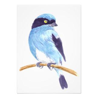 Foto Pássaro azul
