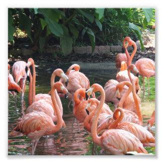 Foto Pássaros cor-de-rosa tropicais do flamingo