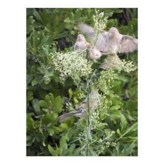 Foto Pássaros & plantas