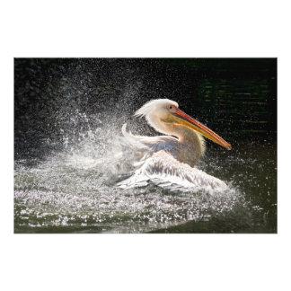 Foto Pelicano impressionante na água