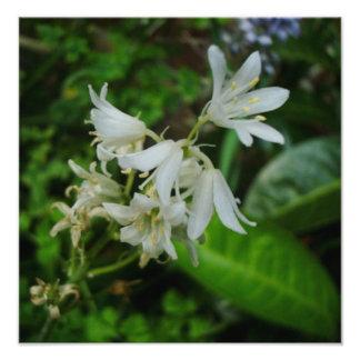 Foto pequena bonito das flores brancas