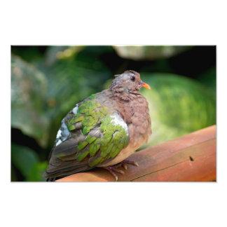 Foto Perfil e vara de pomba esmeralda