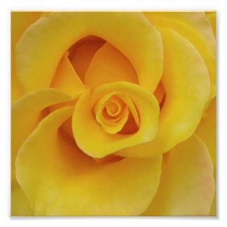 Foto Pétalas cor-de-rosa amarelas românticas