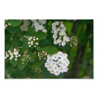 Foto pintada da flor branca