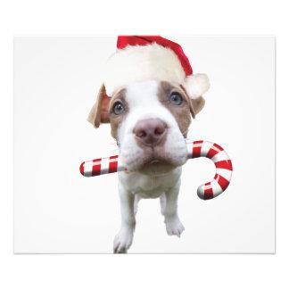 Foto Pitbull do Natal - pitbull do papai noel - cão de