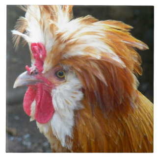 Foto polonesa da galinha