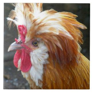 Foto polonesa da galinha azulejo quadrado grande