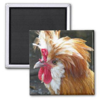 Foto polonesa da galinha ímã quadrado