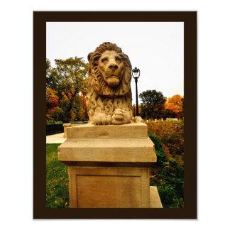 Foto Pondering o leão