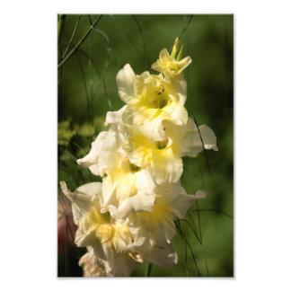 Foto Ponto amarelo da flor do tipo de flor
