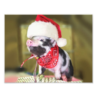Foto Porco Papai Noel - porco do Natal - leitão
