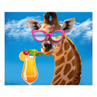 Foto Praia do girafa - girafa engraçado