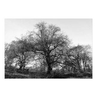 Foto preta & branca da paisagem