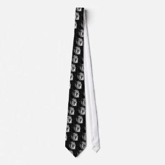 Foto preta & branca do leão gravata