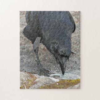 Foto preta do corvo quebra-cabeças