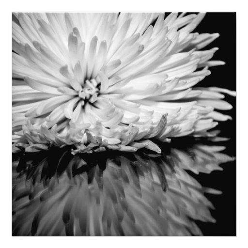 Foto preto e branco da flor