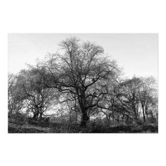 Foto preto e branco da paisagem
