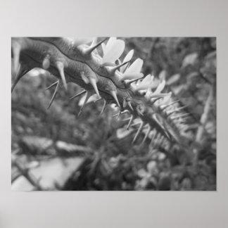 Foto preto e branco do cacto pôster
