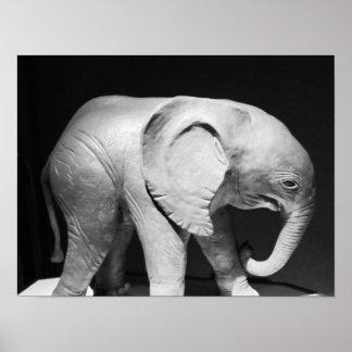 Foto preto e branco do elefante pôster