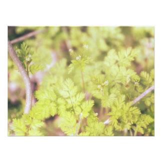 Foto Primavera brandamente verde