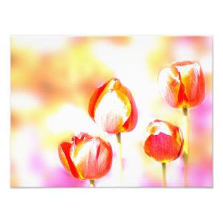 Foto Quarteto vermelho chave alto da flor da tulipa
