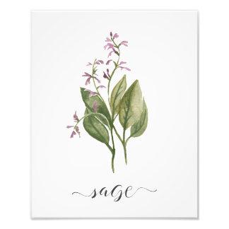 Foto Sábio botânico do impressão da erva da aguarela