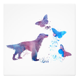 Foto Setter inglês e borboletas