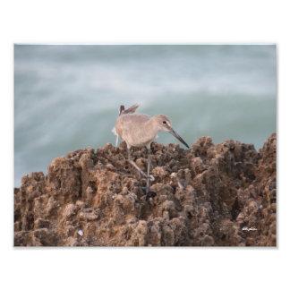 Foto Shorebird em rochas com fundo do oceano da cerceta