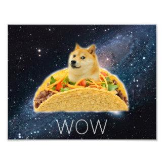 Foto Taco do Doge - doge cão-bonito do doge-shibe-doge