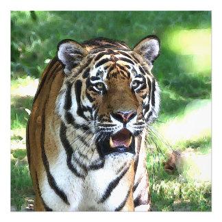 Foto Tigre 5 do carro