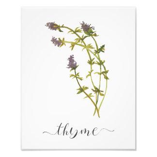 Foto Tomilho botânico do impressão da erva da aguarela