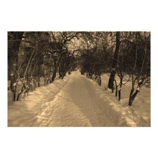 Foto Trilha nevado com as árvores no sepia