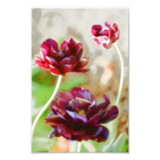 Foto Trio de florescência da tulipa da peônia escura do
