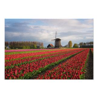 Foto Tulipas vermelhas e um moinho de vento