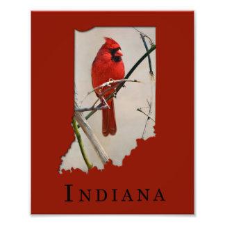 Foto Um pássaro cardinal vermelho em um ramo nas