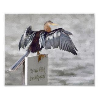 Foto Um pássaro do Anhinga que seca suas asas para fora