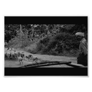 Foto Um passeio do pastor