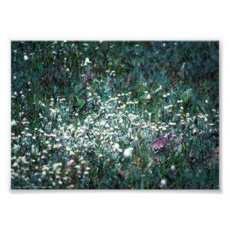 Foto Uma cotovia em um prado