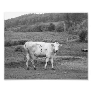 Foto Vaca