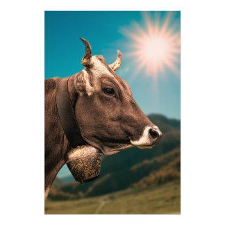 Foto Vaca alpina que veste um sino