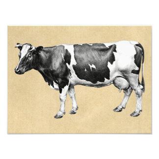 Foto Vaca de leiteria