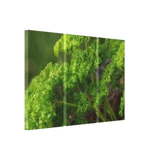 Foto verde natural da erva da salsa para a cozinha impressão de canvas esticadas