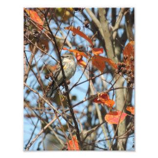 Foto Warble Amarelo-Rumped no inverno