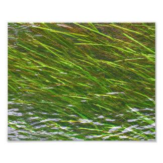 Foto Watergrass