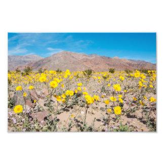 Foto Wildflowers do Vale da Morte