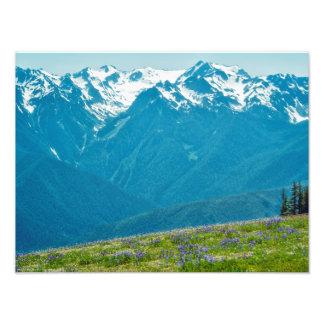 Foto Wildflowers e montanhas